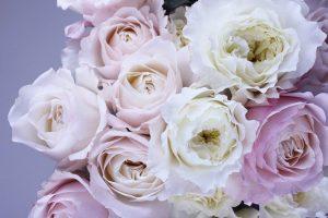 25749b5b9 Poznáte reč kvetov? Pozor na ich symboliku!   RHAPIS