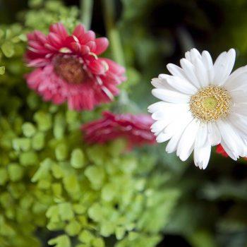 Kvetinárstvo Rhapis kvetinové realizácie