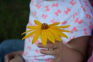 Blog Rhapis rady a tipy